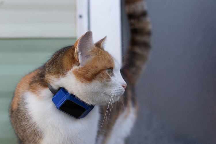 Meilleur Collier GPS Chat