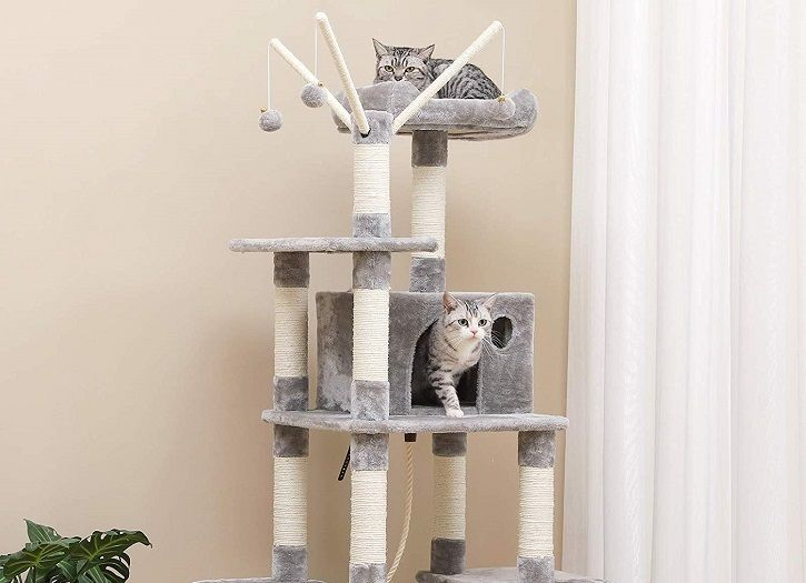 meilleur arbre de chat adulte